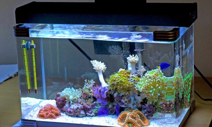 When Buying a Nano Reef Tanks
