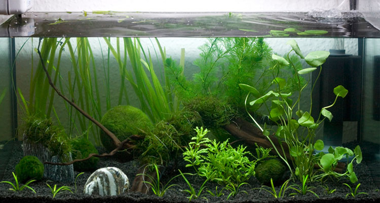What is the Best Filter for 5 Gallon Tank?