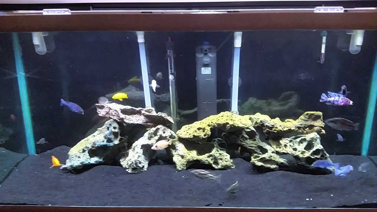 Best Filter for 75 Gallon Tank