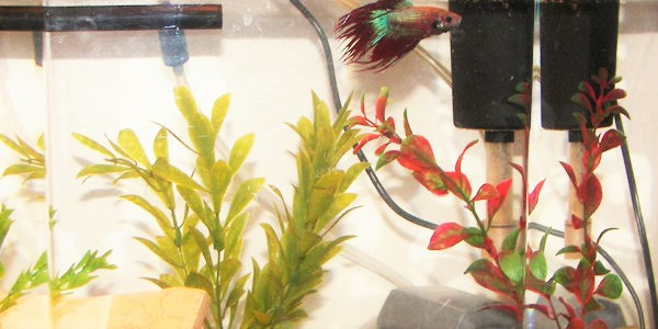 Best Filters for Betta Fish