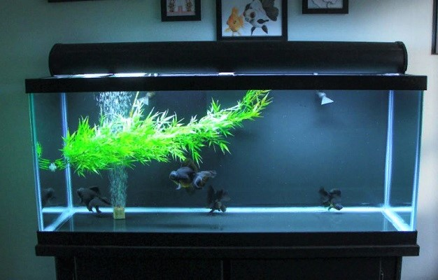 Choosing the Best Filter for 40 Gallon Tank