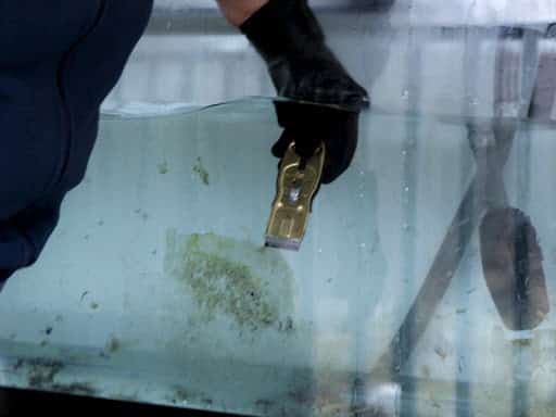 How to Clean a Used Fish Tank