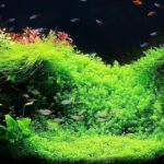 How to Put Live Plants to Your Aquarium