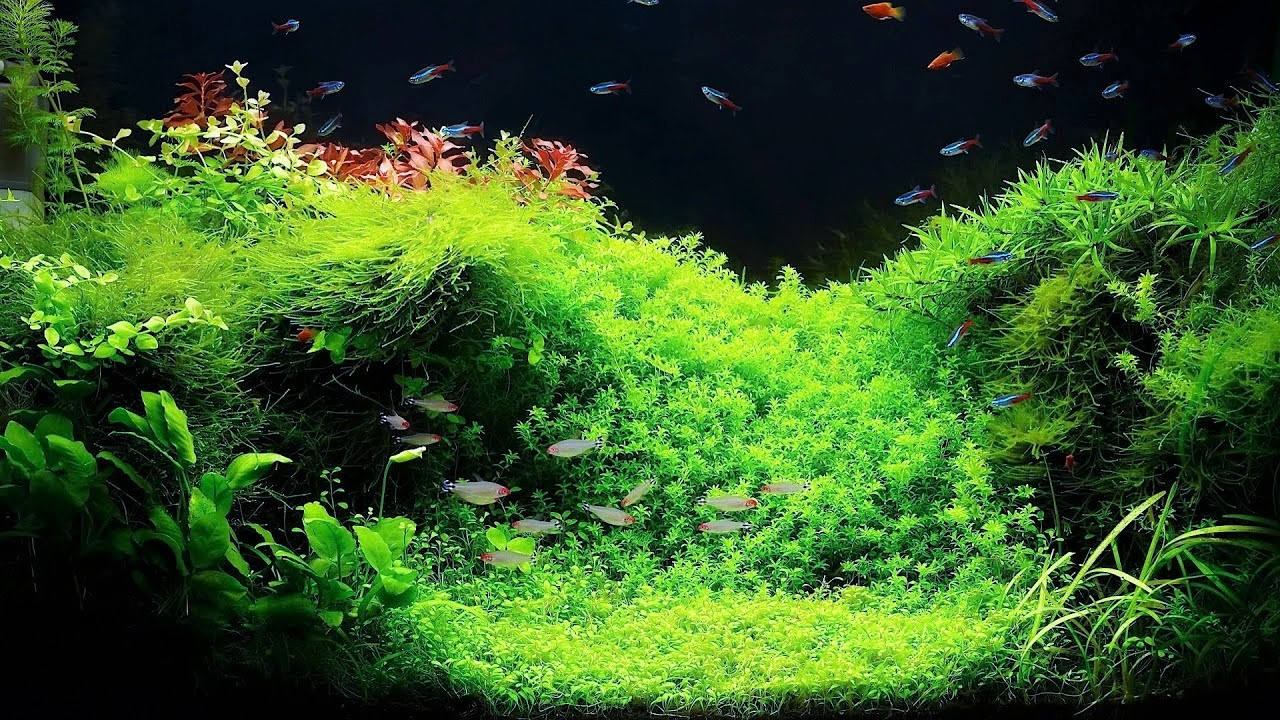 How to Put Live Plants to Your Aquarium