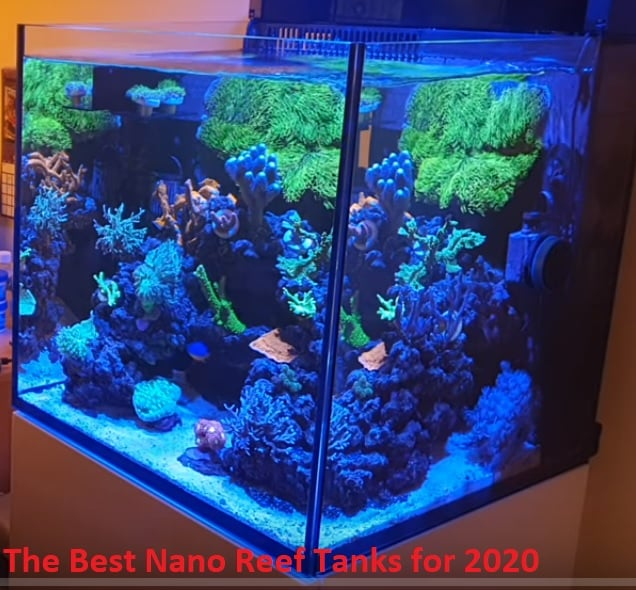 The Best Nano Reef Tanks