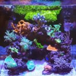 What to Look for When Buying a Nano Reef Tank
