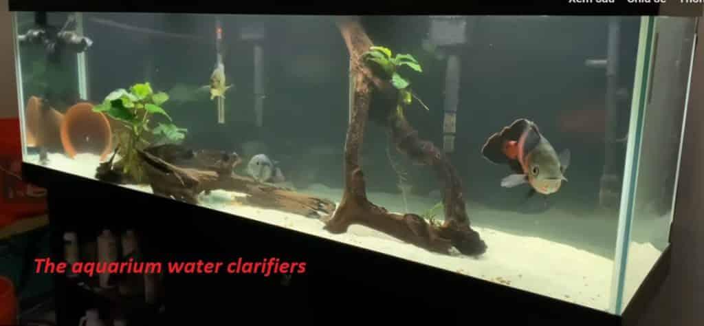 Here we introduce The Best Aquarium Water Clarifier