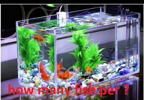 how many fish per gallon in a tank